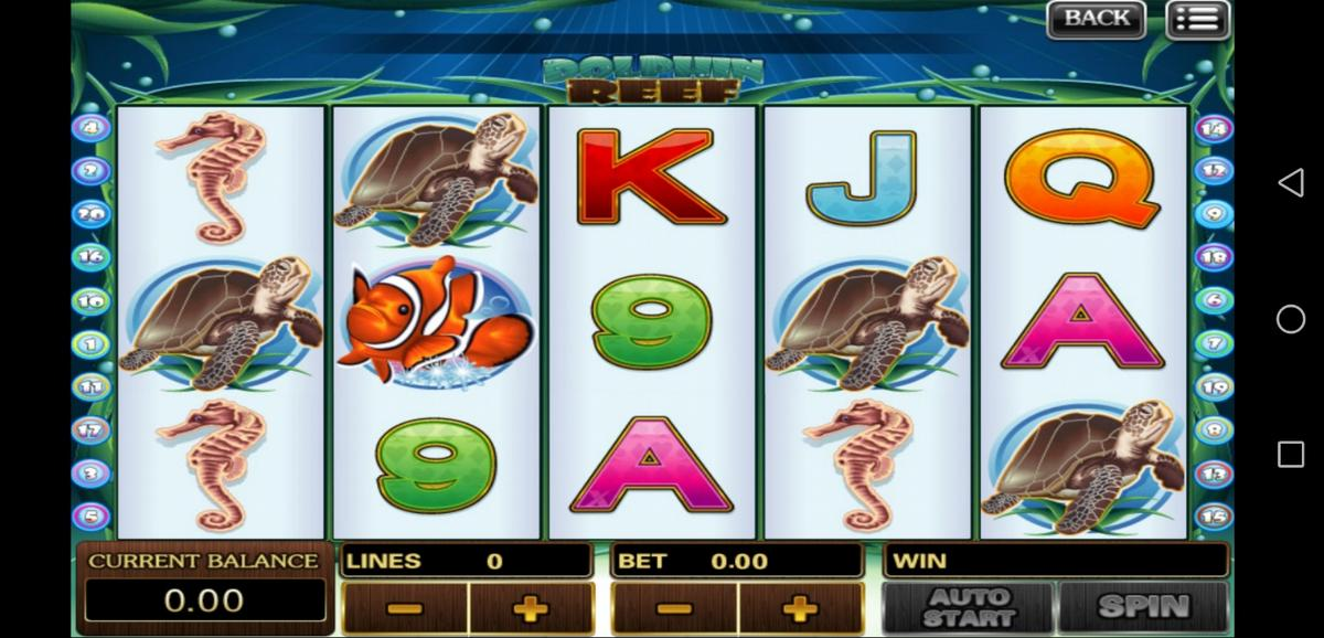 dolphin reef slot gameplay